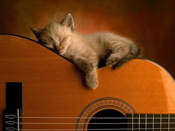 boi-na-gitare