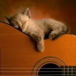 Бой на гитаре