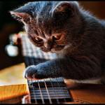 Вибрато на гитаре